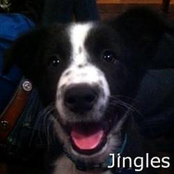 Jingles_TN.jpg