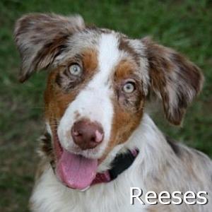 Reeses_TN.jpg