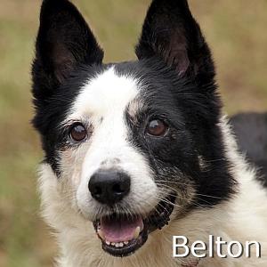 Belton_TN.jpg