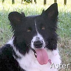 Aster-TN.jpg