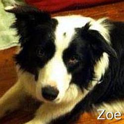 Zoe2_TN.jpg