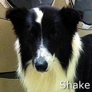 Shake_TN.jpg