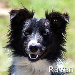 Raven-TN.jpg