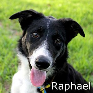 Raphael_TN.jpg