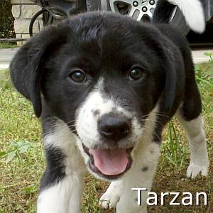 Tarzan_TN.jpg