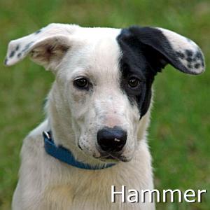Hammer_TN1.jpg