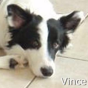 Vince_TN.jpg