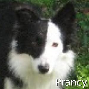 Prancy_TN.jpg