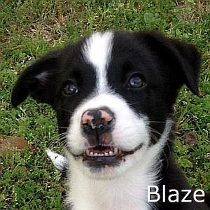 Blaze_TN2.jpg