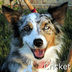 Cricket_TN_New.jpg