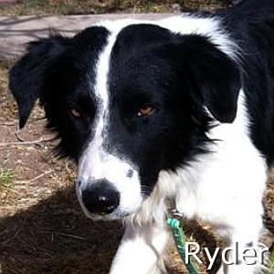 Ryder_TN.jpg