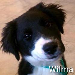 Wilma_TN.jpg