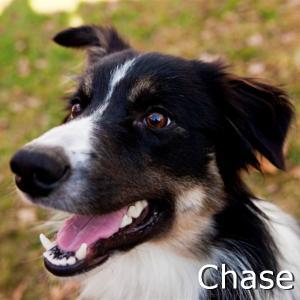 Chase2_TN_New.jpg