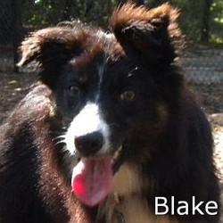 Blake_TN.jpg