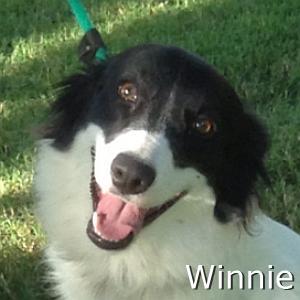 Winnie_TN.jpg