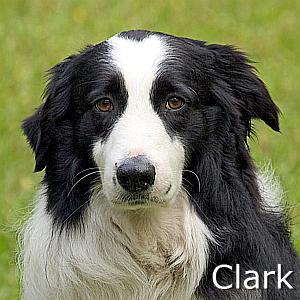 Clark_TN.jpg