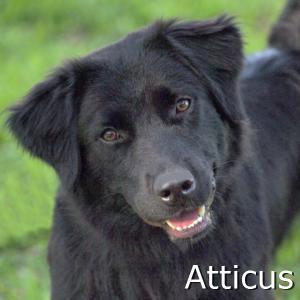 Atticus_TN.jpg