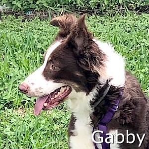 Gabby-TN.jpg