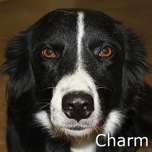 Charm_TN.jpg