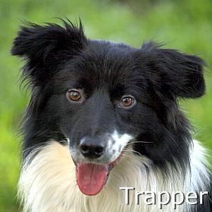 Trapper_TN.jpg