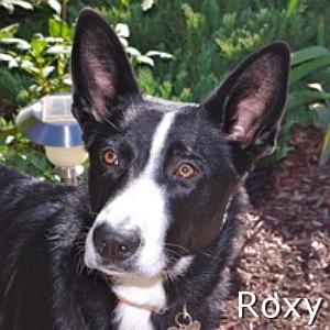 Roxy_TN.jpg