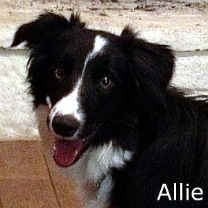 Allie_TN.jpg