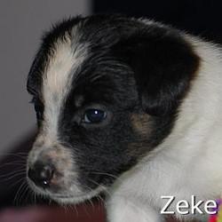 Zeke_TN.jpg