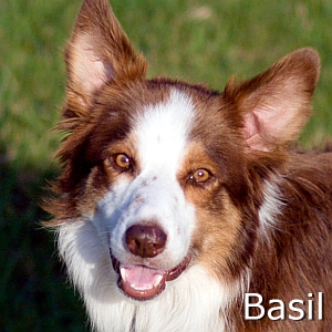 Basil-TN.jpg