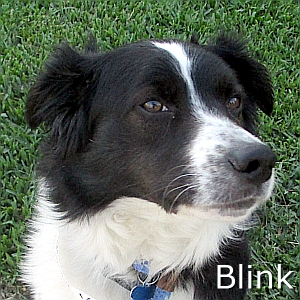 Blink-TN
