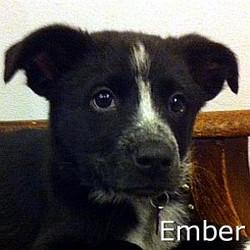 Ember_TN.jpg