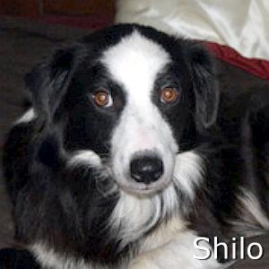 Shilo_TN.jpg