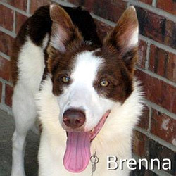 Brenna_TN.jpg