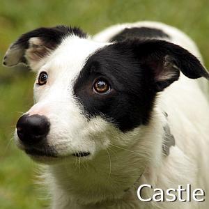 Castle_TN2.jpg