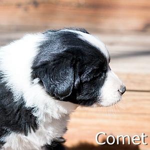 Comet_TN.jpg