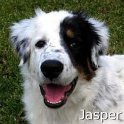 Jasper_TN.jpg