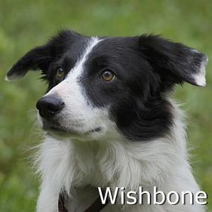 Wishbone_TN2.jpg