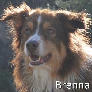 Brenna2_TN.jpg