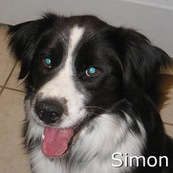 Simon_TN.jpg