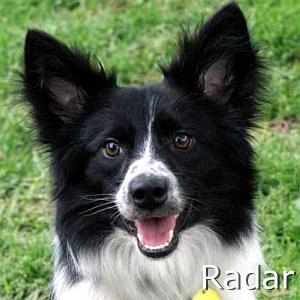 Radar_TN.jpg