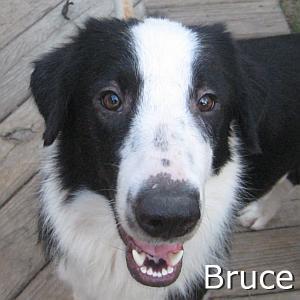 Bruce_TN.jpg