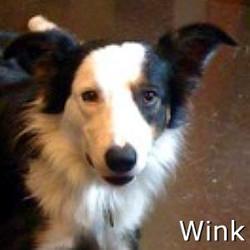 Wink_TN.jpg