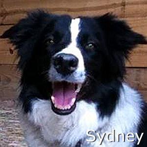 Sydney_TN.jpg