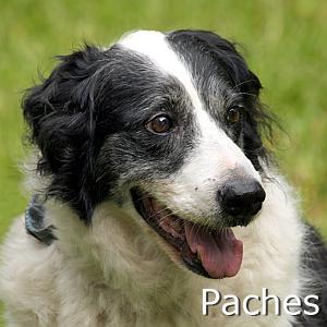 Paches_TN.jpg