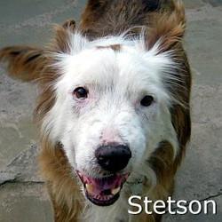 Stetson_TN.jpg