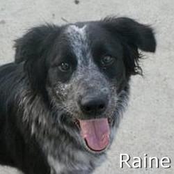 Raine_TN.jpg