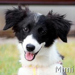 Mimi_TN.jpg