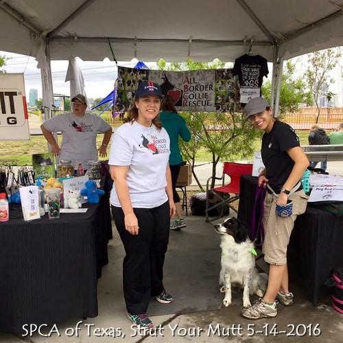 SPCA of Texas, Strut Your Mutt 5-14-2016 (2).jpg