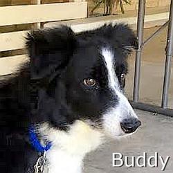 Buddy-TN