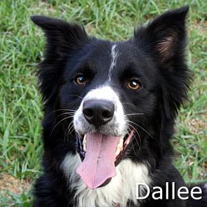 Dallee_TN.jpg