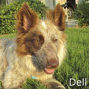 Dell_TN.jpg